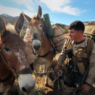 Lance Cpl. Tyler Langford, anti-tank missileman, 3rd Battalion, 3rd Marine Regiment, leads his pack mule during a hike at Marine Corps Mountain Warfare Training Center Bridgeport, Calif., Oct. 13, 2012. Langford used skills he learned in the Animal Packers Course, taught four times a year at MCMWTC. The 16-day course teaches Marines how to use animals in the region they find themselves in as a logistical tool to transport weapons, ammunition, food, supplies or wounded Marines through terrain that tactical vehicles cannot reach. U.S. Marine Corps photo by Lance Cpl. Ali Azimi